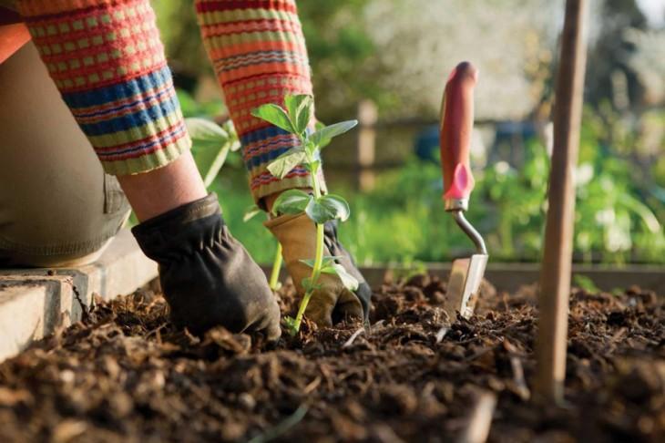 Κηπουρική για ενήλικες (τμήμα προχωρημένων) στο Κέντρο Πολιτισμού Ίδρυμα Σταύρος Νιάρχος