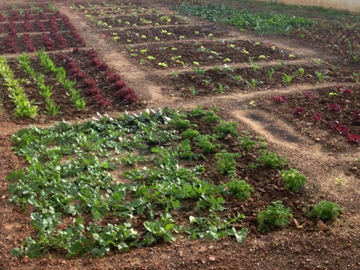 Αστική γεωργία… καλλιεργώντας βιολογικά, τροφή μέσα στην πόλη